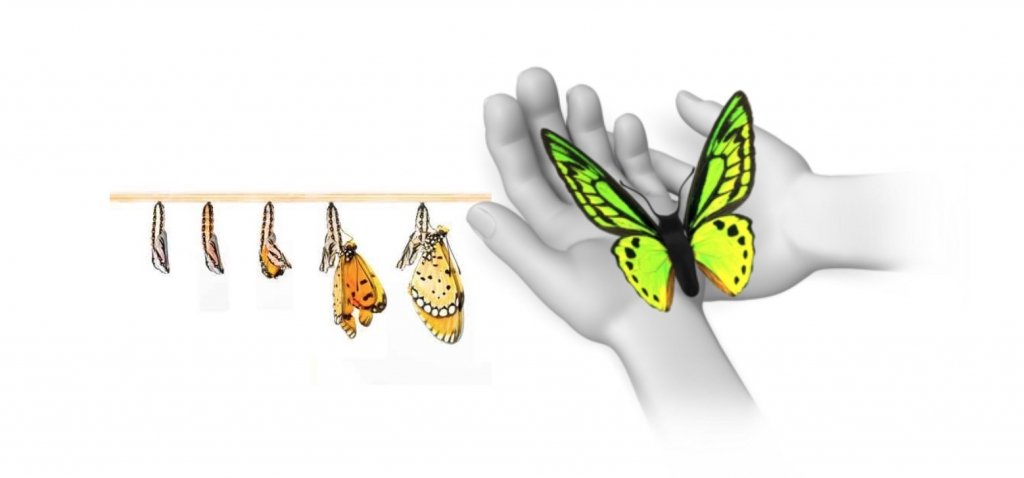 Tomar-la-vida-mariposa