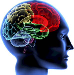neurocoaching-brain-nci-300-min