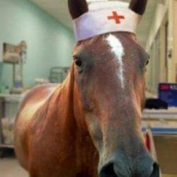 Equinoterapia-NCI-Caballo-Enfermero
