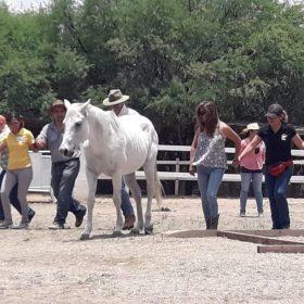 NCI-Horsecoaching-2018-017
